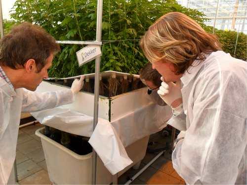 David Domoney checking up on plants