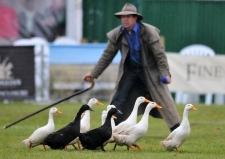 2012 East Anglian Game and Country Fare - Ducks by Steve Adams from the EDP