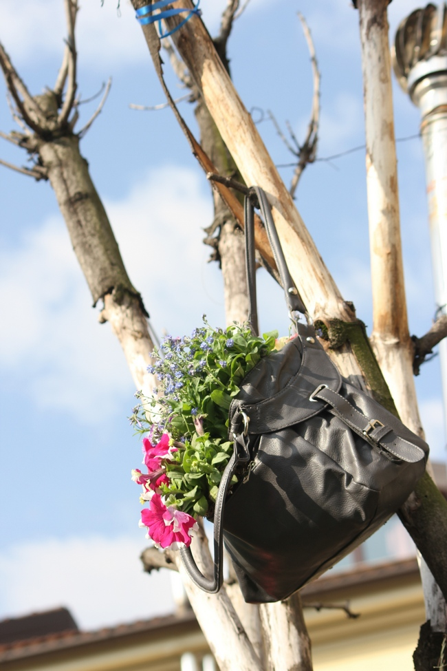 Garden in a bag, in a tree
