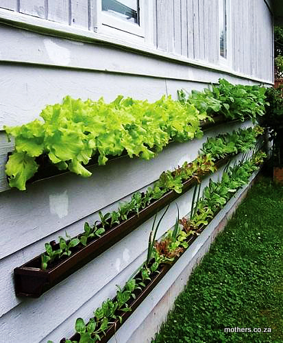 plants in gutters