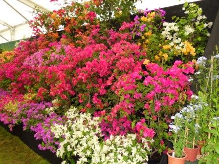 Hampton Court Flower Show 2012