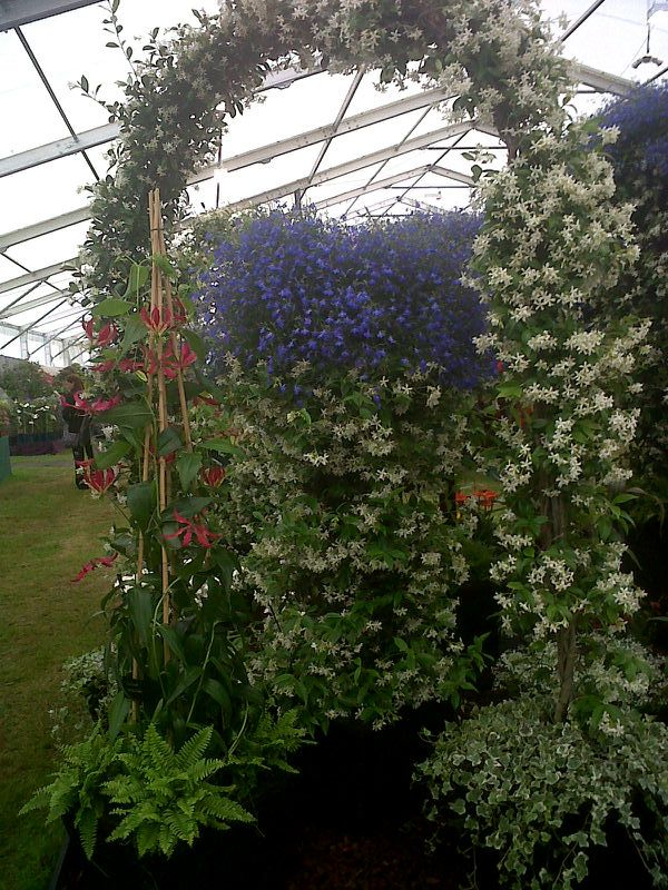 Lily marquee at Hampton Court Palace Flower Show