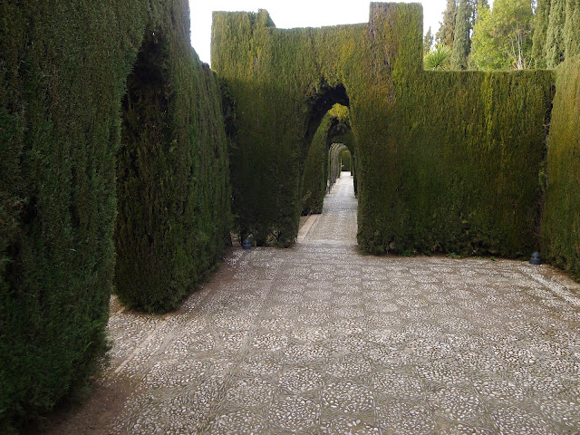 Cypress Trees at The Generalife Andalucia, Spain