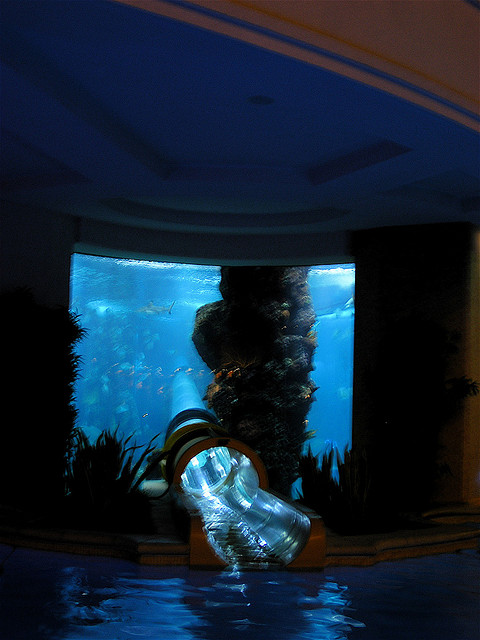 Shark tank swimming pool