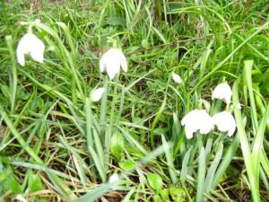 Flowers 2013 004