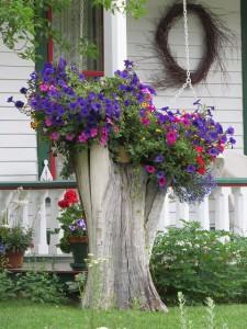 Treestump flowers