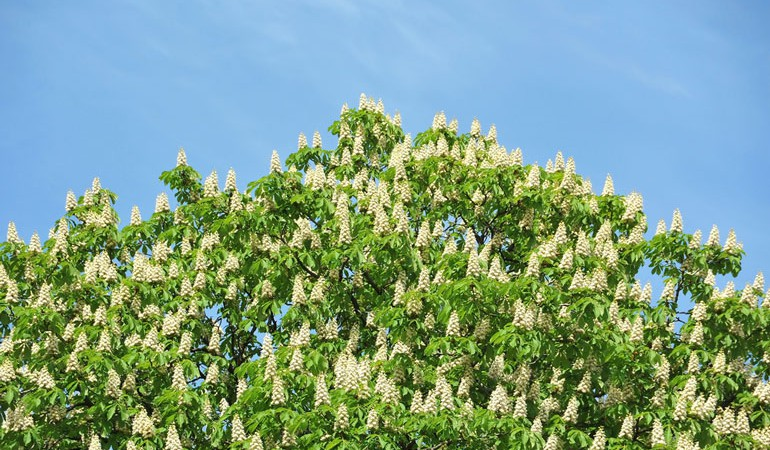 Have your garden trees got you stumped?
