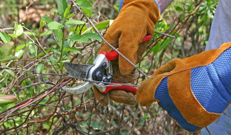 This is the only Pruning Guide you will need in 2014