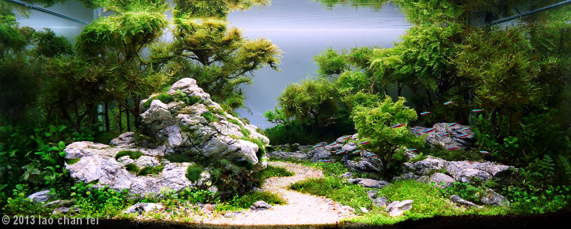 This Is The Amazing Art Of Aquascaping