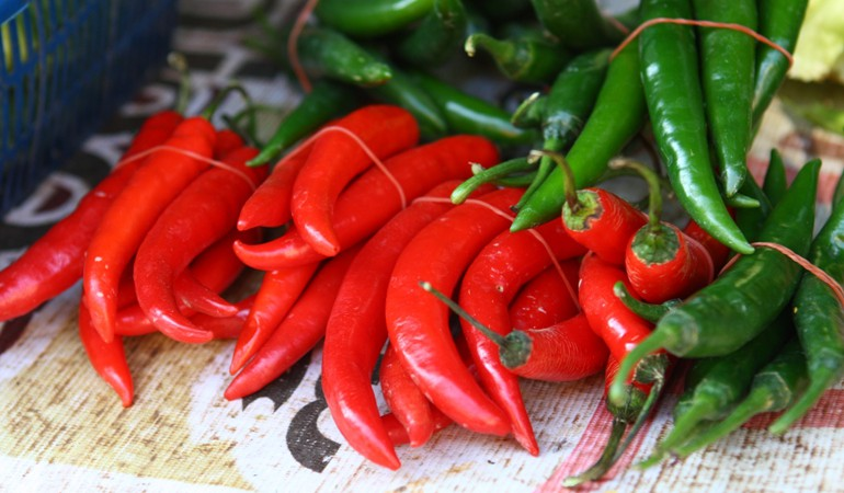 How to grow your own chilli plants