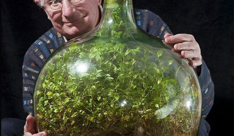 This Terrarium Plant Has Survived 50 Years Without Water Good To