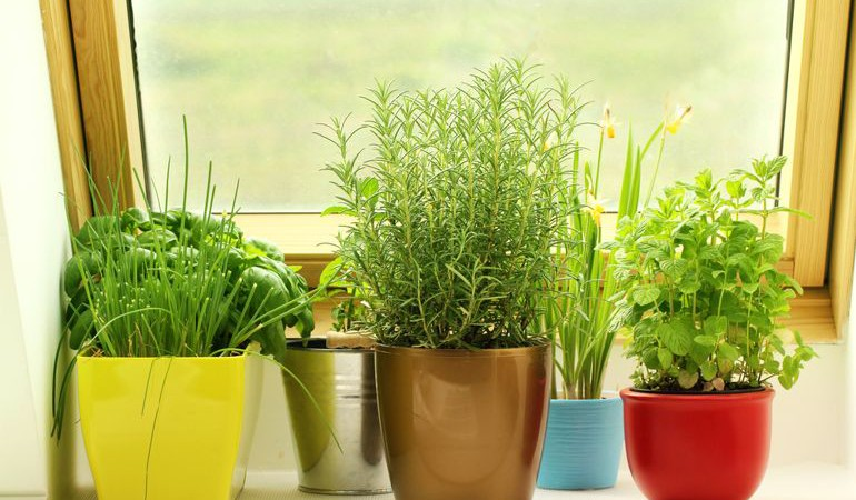 5 Things that make Growing Herbs in your Window Easier