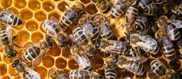 The Case for Keeping Bees in your own Garden