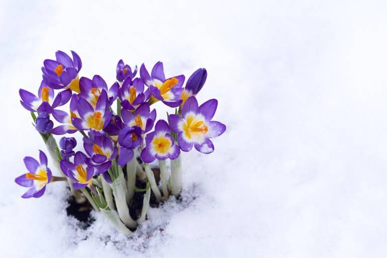 clip art spring snow - photo #15