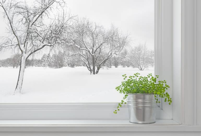 How to prepare your plants for the cold weather for Best windows for cold climates