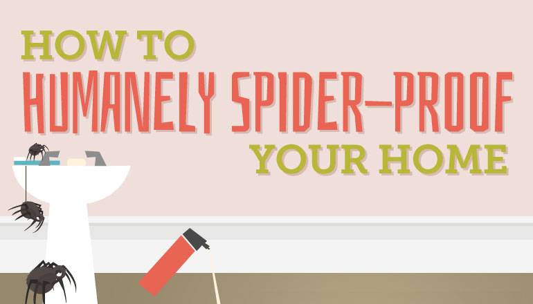 How to get rid of spiders from your home [infographic]