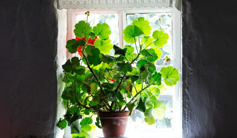 Natural Ways to Purify the Air in Your Home