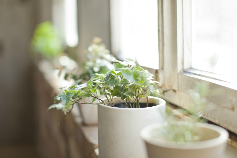 Turning down your heating is good news for your houseplants