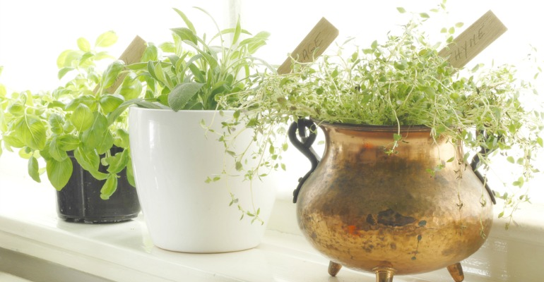 How to Grow Food and Foliage Indoors