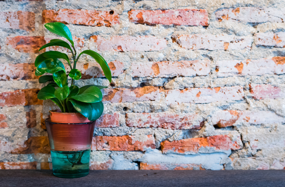 You can grow a wide variety of plants inside your own home - read how to do it on Good to be Home