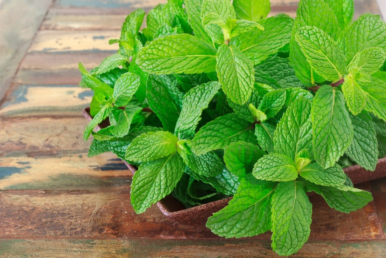 Mint is a popular choice amongst our chefs and food writers picking their favourite home-grown herbs