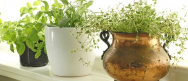 What Do Pro Chefs Think Are The Most Essential Home-Grown Herbs?