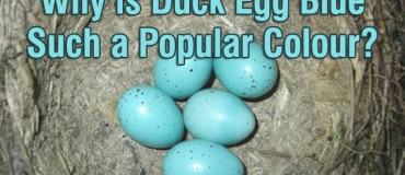 What Is It About Duck Egg Blue That's So Appealing In 2015?