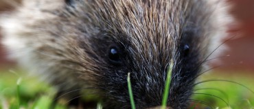 How To Help the Humble Hedgehog With Homemade Compost