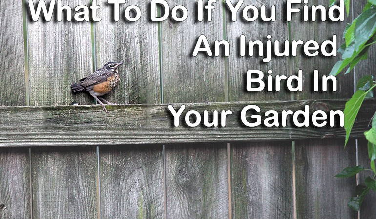 What To Do If You Find an Injured Bird & Funky Bird houses to Keep Them Safe