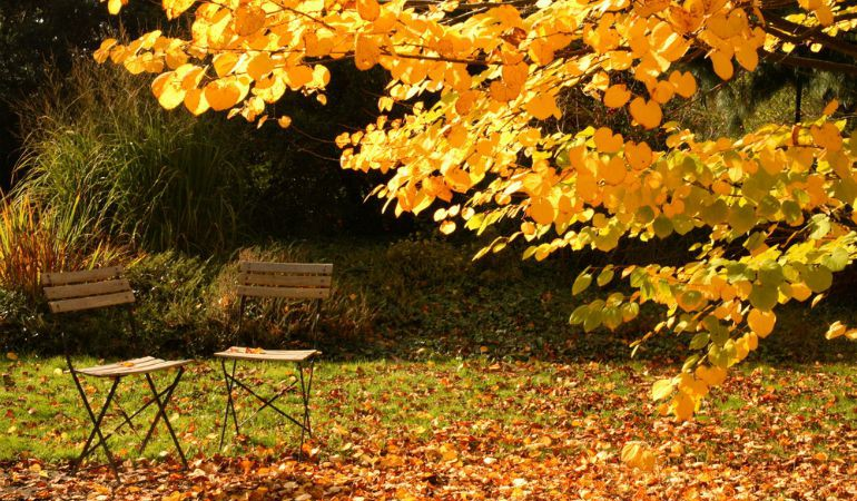How To Do The Gardening: Autumn Edition