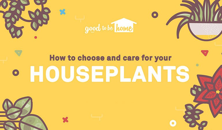 How To: Choose And Care For Your Houseplants