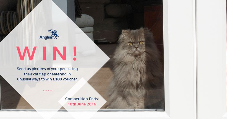 Win £100 Vouchers with Pictures of your Pets