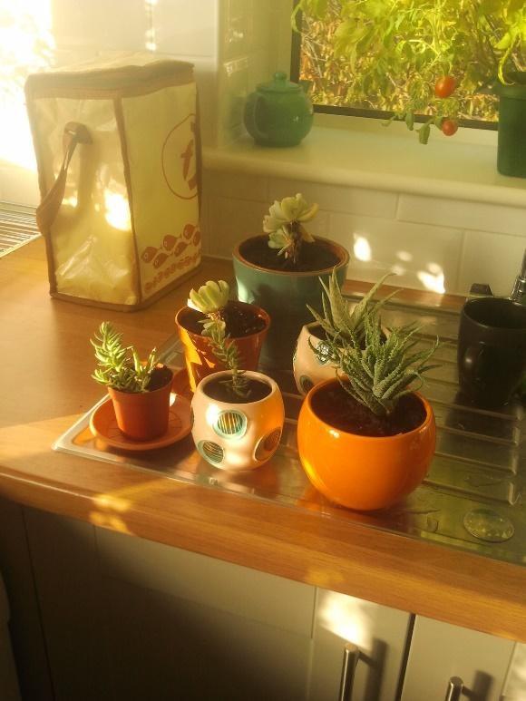 Gondo Saunders' kitchen micro-garden