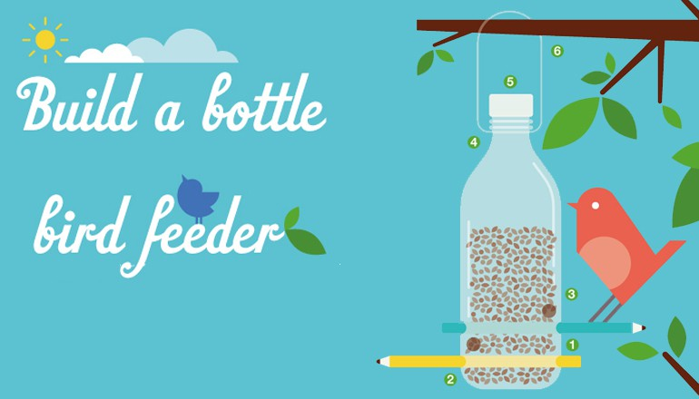 How to Build a Birdfeeder to Help Them Thrive During Winter