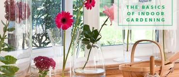 The Basics of Indoor Gardening