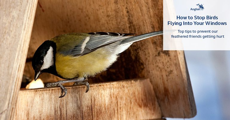 How to Stop Birds Flying Into Your Windows