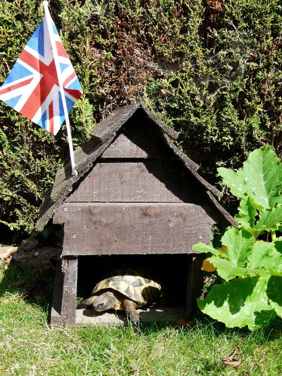 Michael's tortoise house for Zippy