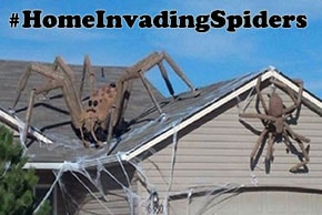 Spiders on a house - #HomeInvadingSpiders